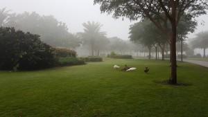 Al Barsha park- Dubai- Winter 2017