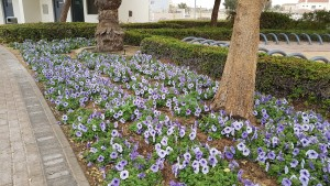 Al Barsha park- Dubai- February 2017